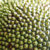 Jackfruit close-up